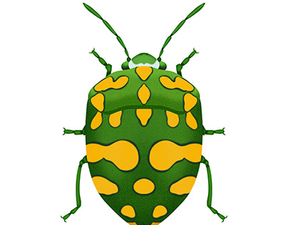 Physic Nut Stink Bug (Green)