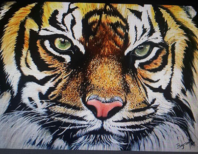 tiger oils