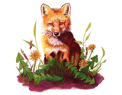 Fox Among The Dandelions