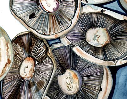 Mushrooms from Borough Market