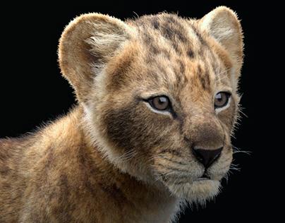 Lion Cub Model