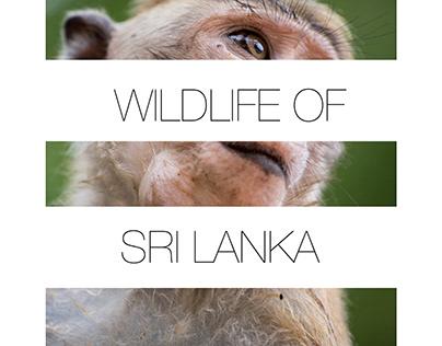 Wildlife of Sri Lanka