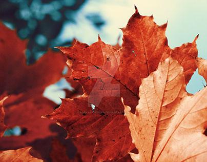 Autumn photo series