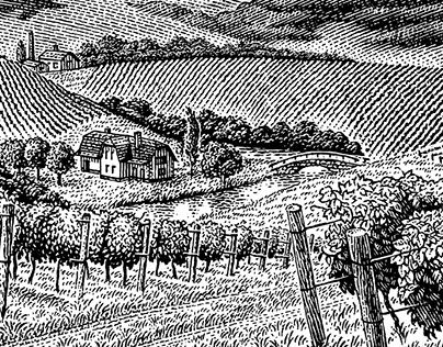 Panorama of the vineyard.