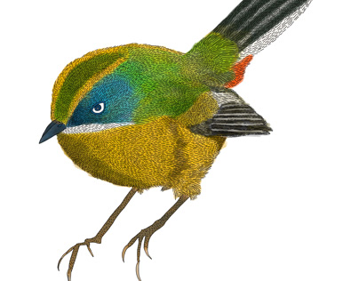 Ilustración del Siete Colores para Posada del Parque