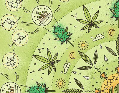 Medical Cannabis 2019
