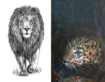 Wild Animal Drawings