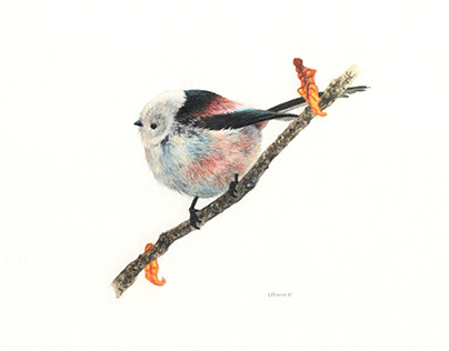 Water Color Paintings of Birds 2