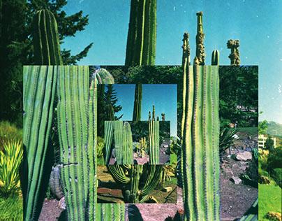 Cactus collage