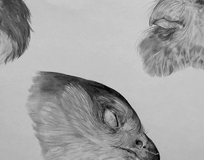 Freezer-Bird Studies