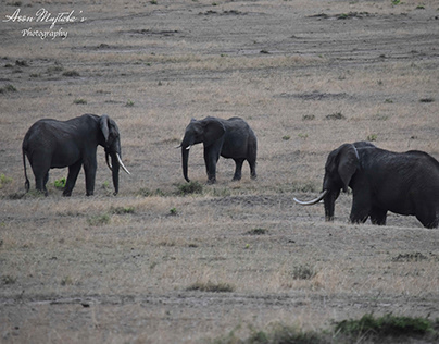 Wildlife Photography in Masai Mara, Kenya