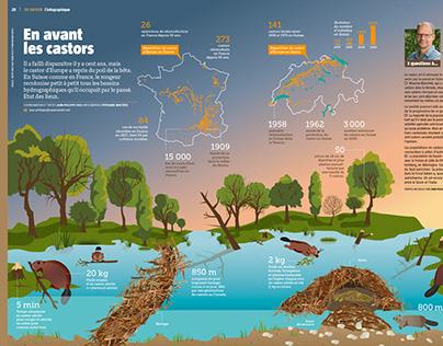 Beaver Infographic (La Salamandre no251) février 2019
