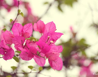 Mơ thấy cây hoa giấy là điềm báo may hay rủi?