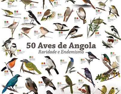 Poster com ilustrações do livro 50 Aves de Angola