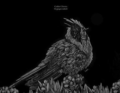 Ilustración Colibrí Chivito