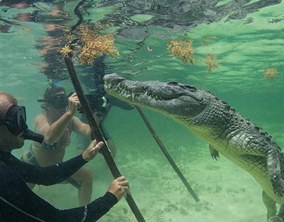 Crocodiles at Chichorro Banks, Mexico