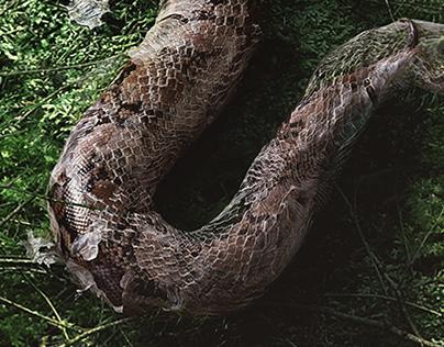 WWF Snake