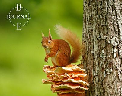 BEJournal Media Kit