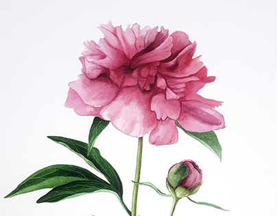 Botanical Illustration Vol. 6