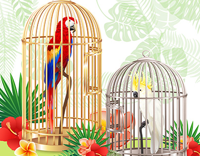 Parrots Illustration