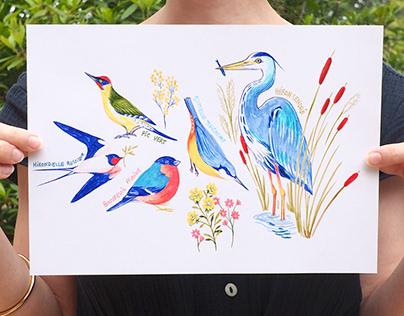 Nature illustrations