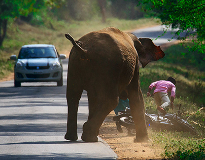 When Elephants and People meet