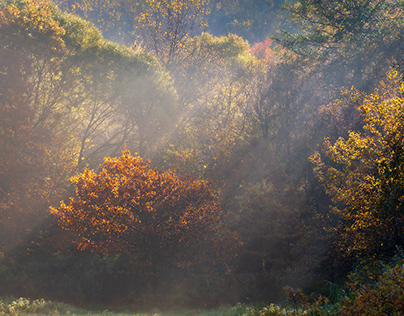 Sun, fog and autumn