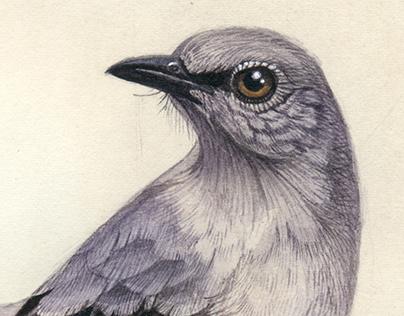 Watercolour birds | 2016