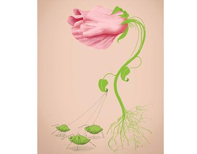 Wild Flowers, digital drawings