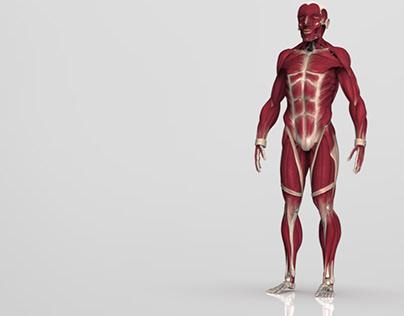 Base anatómica de huesos y músculos