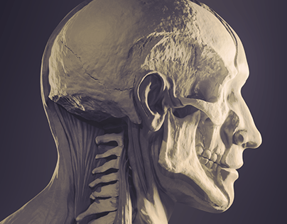 Detail of Neck Anatomy