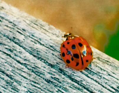"""""""Ladybug Luck"""""""