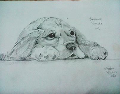 Cute Doggy Pencil Sketch