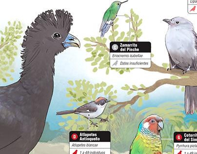 Cada vez son menos las aves en el cielo: infografía