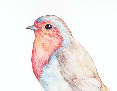 Painted birds I