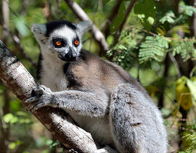 MADAGASCAR COULEUR