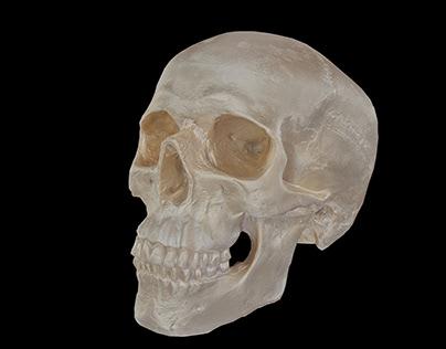 Skull Scan