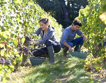 Plantgrowpick  Best Ways To Find Farm Jobs In Australia
