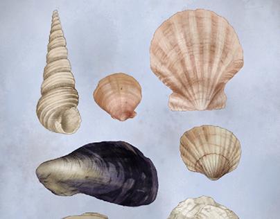 Seashell Scavenger Hunt