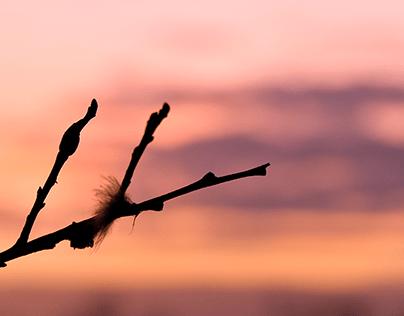 Twig at dusk