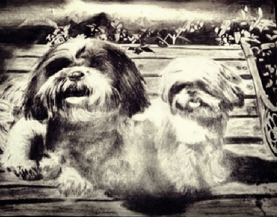 Shih tzu drawing