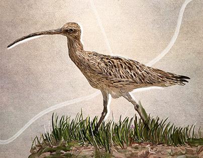 The Birds of Anatolia