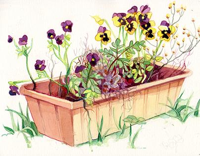 Ursula's Flower Garden