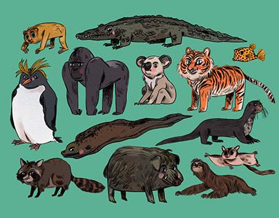 THE ANIMAL CONUNDRUM