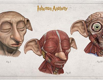 INHUMAN ANATOMY Dobby head anatomy