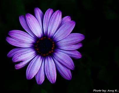 Just a Little Purple Flower