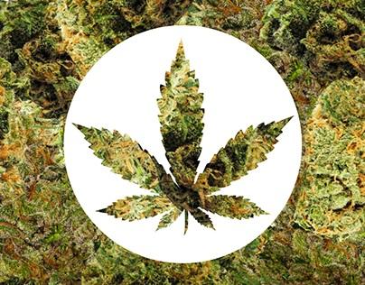 Infográfico - A história da proibição da Cannabis