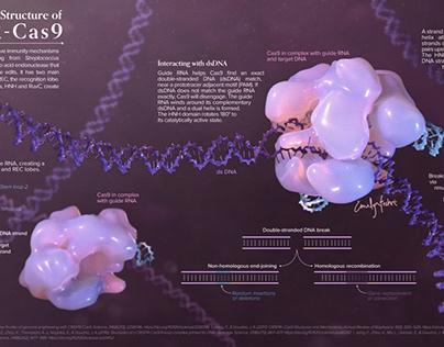 Mechanisms & Structure of CRISPR-Cas9