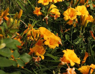 Flowers around