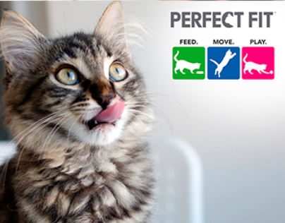 Perfect Fit на Пятнице